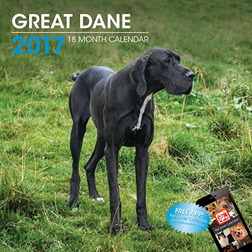 LittleGifts Great Dane 2017 Calendar (3056)