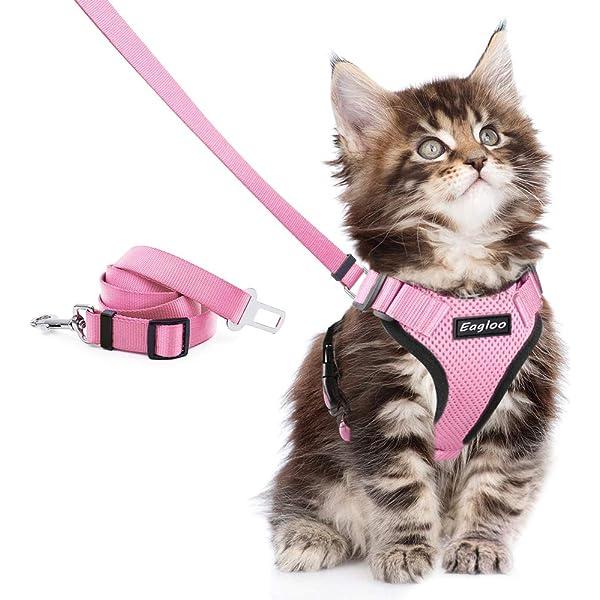 Oferta Especial 1 bastante Doble Seguridad Collar Para Gatos Ajustable