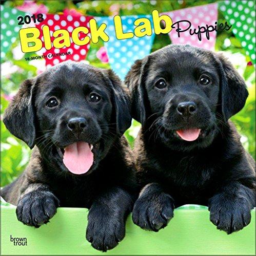 Labrador Retriever Puppies, Black Labs Calendar 2018 - Deluxe Wall Calendar (12x12)