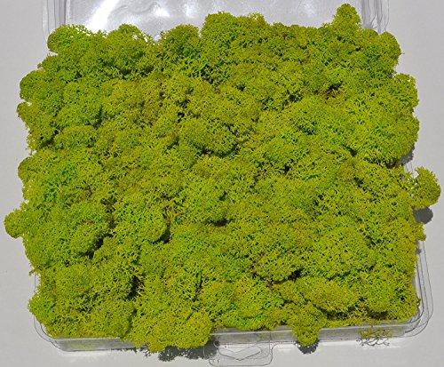 Preserved Moss Reindeer Moss Floral Moss Pack of 2.5oz