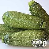 Grey Zucchini Squash Seeds - 25 Seeds NON-GMO