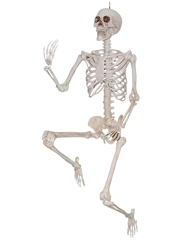 Sunstar Industries 5 Foot Life Size Pose & Hold Skeleton Halloween Decoration Prop