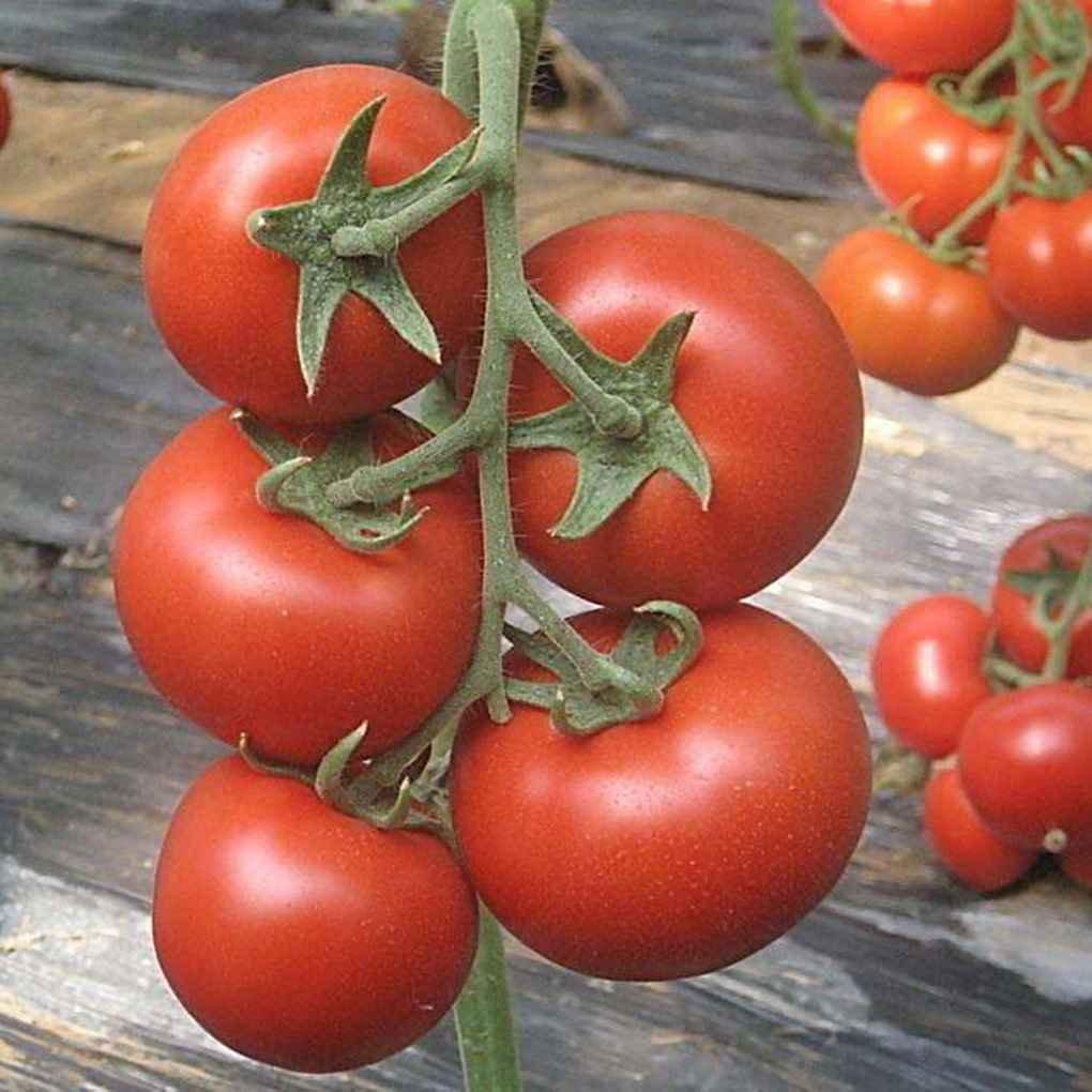 Sunlera 200pcs//Semillas Compra Hogar Jard/ín Tomates en Maceta de Bonsai Balc/ón Fruta Vegetales Semillas
