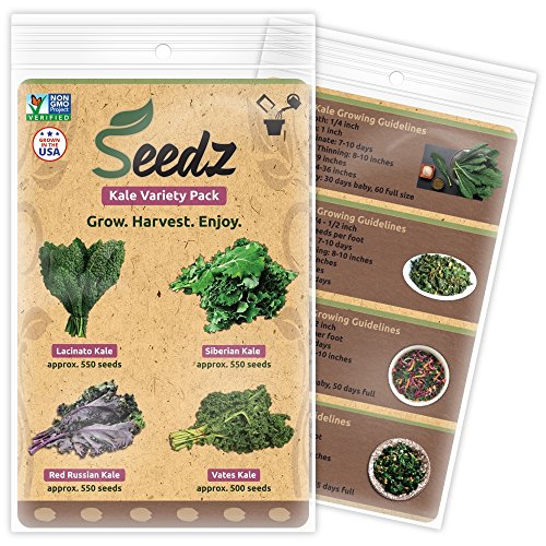 TOP-SELLING Certified Organic Seeds - Kale Variety Pack - Lacinato Kale, Siberian Kale, Red Russian Kale, Vates Kale Seeds - Heirloom Seeds - Non GMO, Non Hybrid Vegetable Seeds - USA (Lacinato Kale Seeds)