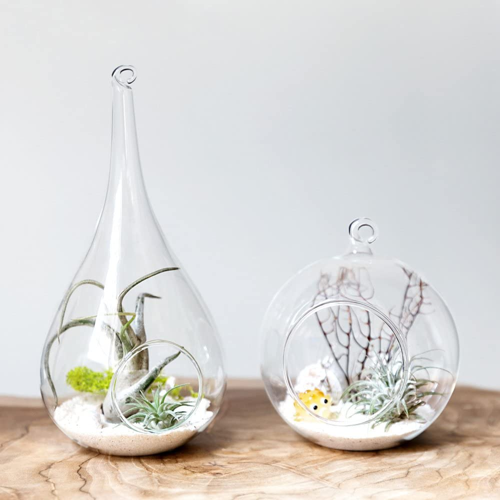 Mkono 3 Pack Glass Hanging Planter Air Fern Holder Terrarium Plants Hanger Vase Home Christmas Decoration Gift Idea for Succulent Moss Tillandsias Air Plants, Olive, Globe and Teardrop: Garden & Outdoor