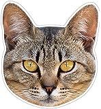 kmag 猫の顔マグネット キジトラ
