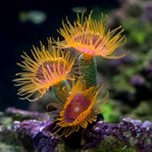 Danmu 1Pc of Polyresin and Silicone Coral Ornaments, Aquarium Coral Decor for Fish Tank Aquarium Decoration 1 1/3