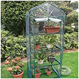 Cheap 4-tier Greenhouse with Cover