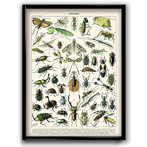 insect pictures - 1