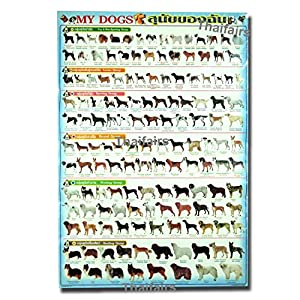 100 WORLD DOGS SPECIE FOR EDUCATION DEMONSTRATION: Posters & Prints