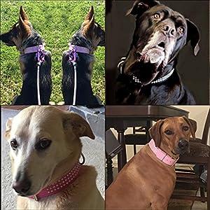 "Beirui Rhinestones Dog Collar - Leather Made with Sparkly Crystal Diamonds Studded - Shining Pet Apprearance for Medium & Large Dog Walking(16-19""(22""),Black)"