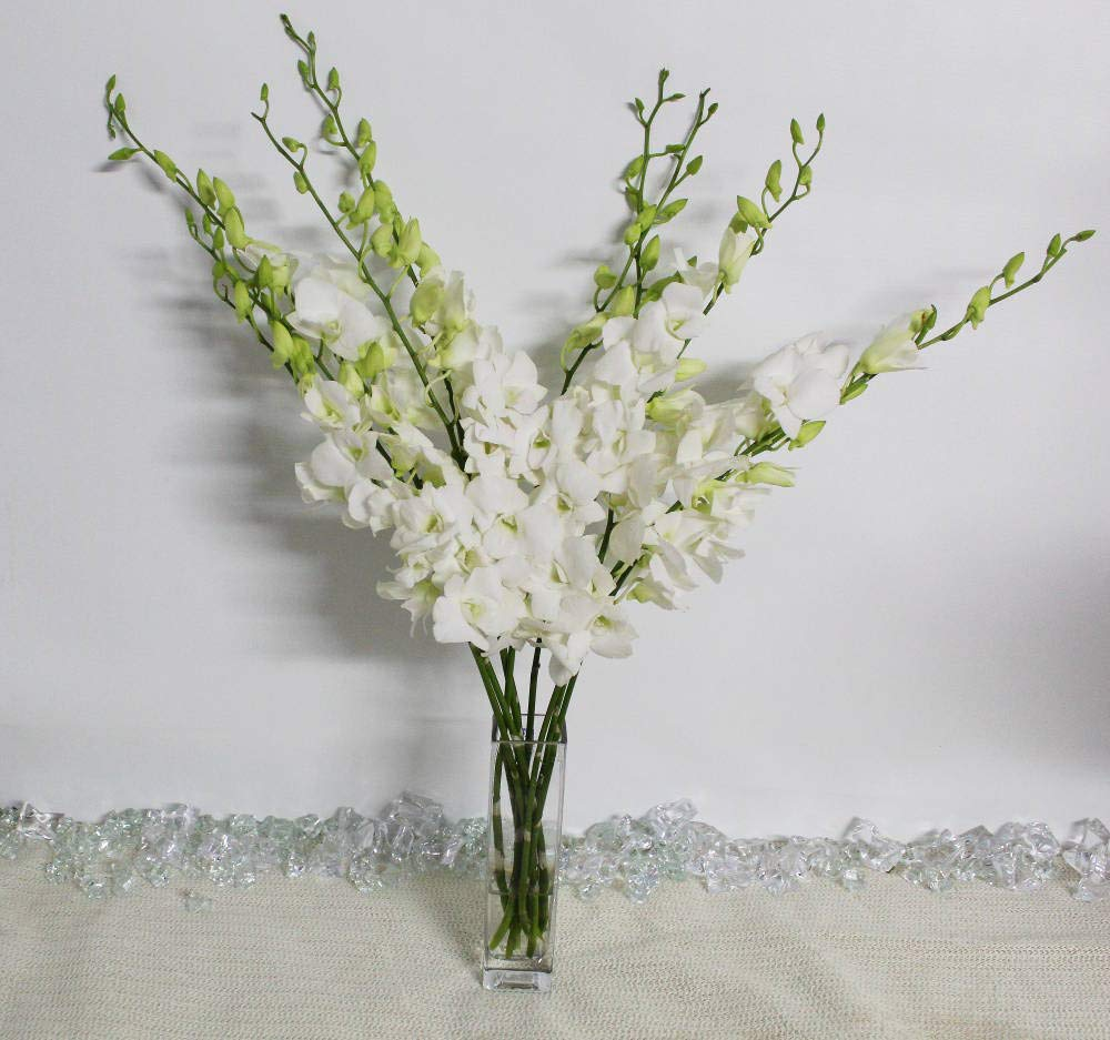 Athena's Garden Fresh Cut White Orchids Bunch with Glass Vase, by Athena's Garden