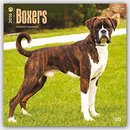 Boxers 2016 International - Boxer - 18-Monatskalender mit freier DogDays-App: Original BrownTrout-Kalender [Mehrsprachig] [Kalender] (Wall-Kalender)