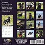 2020 Rottweilers Wall Calendar by Bright Day, 16 Month 12 x 12 Inch, Cute Dogs Puppy Animals Rottie's Canine 7