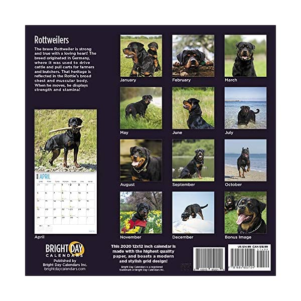 2020 Rottweilers Wall Calendar by Bright Day, 16 Month 12 x 12 Inch, Cute Dogs Puppy Animals Rottie's Canine 2