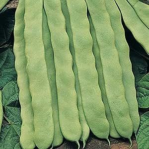 Kings Seeds - Semillas para verduras