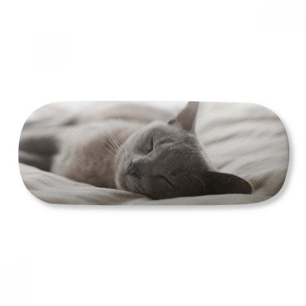 Animal Cute Gray Cat Photograph Shoot Glasses Case Eyeglasses Clam Shell Holder Storage Box