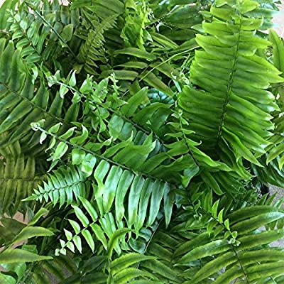 AMERICAN PLANT EXCHANGE Macho Giant Sword Fern Live Plant, 3 Gallon, Indoor/Outdoor Air Purifier : Garden & Outdoor