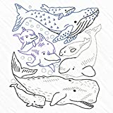 Heidi Boyd | Whales and Dolphin Embroidered Whimsy Tea Towel Kit | Stitch up Some Underwater Fun with This New Easy to Sew Whales and Dolphins Embroidery Kit
