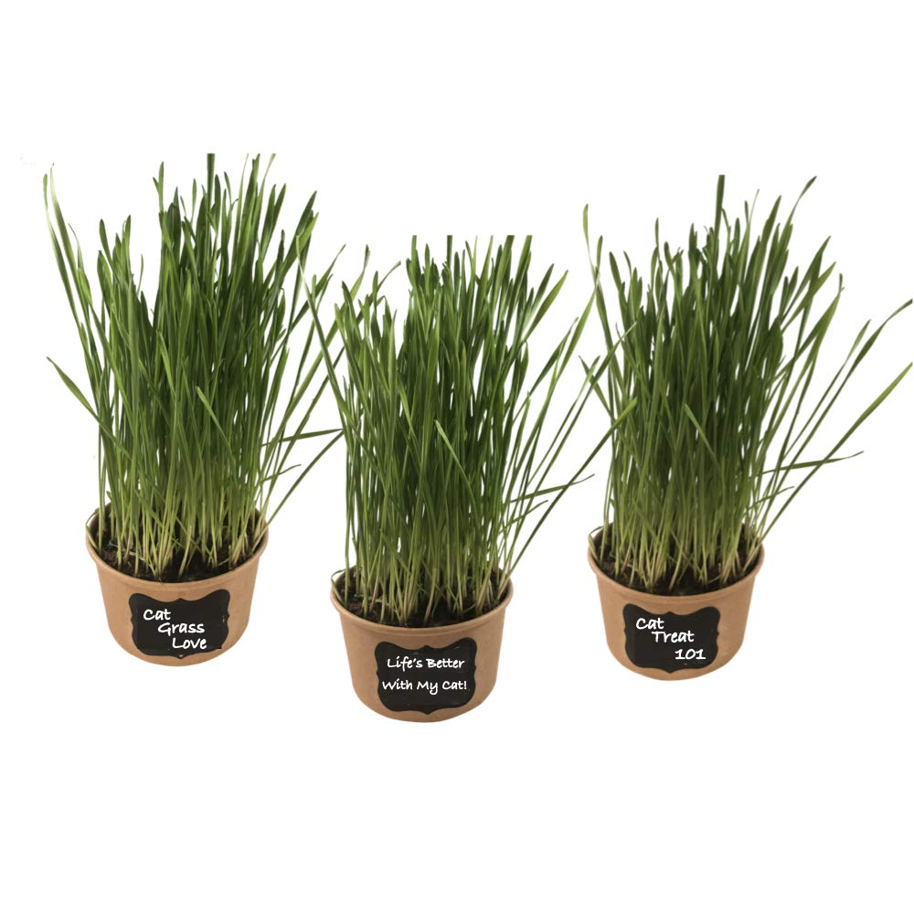 Easy Cat Grass Kit 3 Pack Just Add Water. Includes Certified Organic Non GMO Wheatgrass Seed, Fiber Soil, Cups, Chalkboard Labels Chalk. Your Pets Will Love This.