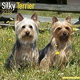 Silky Terrier Calendar - Dog Breed Calendars - 2017 - 2018 wall Calendars - 16 Month by Avonside