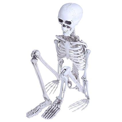 Amazon Cencity Human Skeleton Medium Skull Full Body Anatomical