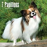 Papillons Dogs Wall Calendar 2018 {jg} Best Holiday Gift Ideas - Great for mom, dad, sister, brother, grandparents, grandchildren, grandma, gay, lgbtq.