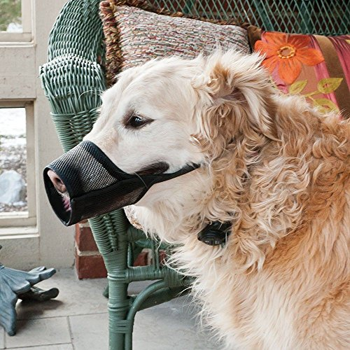 Coastal Dog Muzzle (Best Fit Dog Muzzle Size: 3)