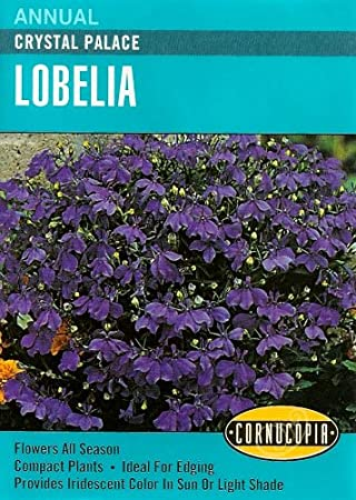 Amazoncom Heirloom Lobelia Crystal Palace Flowering Plants