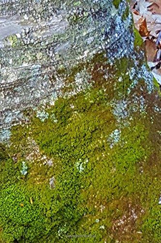 Read Online Moss Birch Tree Bark Journal: (Notebook, Diary, Blank Book) (Nature Photo Journals Notebooks Diaries) pdf