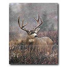 Wildlife Animal Wall Decor Picture Mule Deer Big Antler Rack Hunting Art Print Poster (16x20)