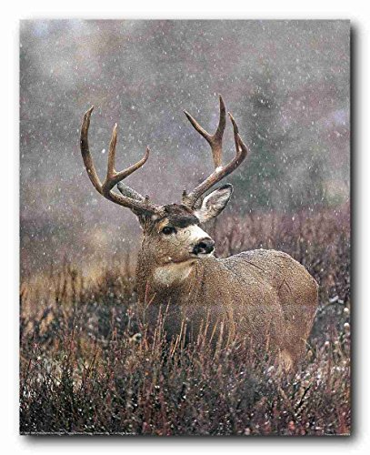 Mule Deer Big Antler Rack Wildlife Hunting Wall Decor Art Print Poster (16x20)