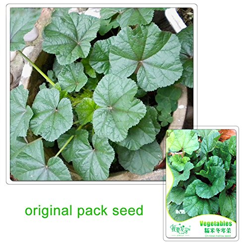 Mallow Plant (30 Particles / Bag Original Packaging Chinese Mallow Seeds Callirhoe Involucrata Vegetables Seeds)