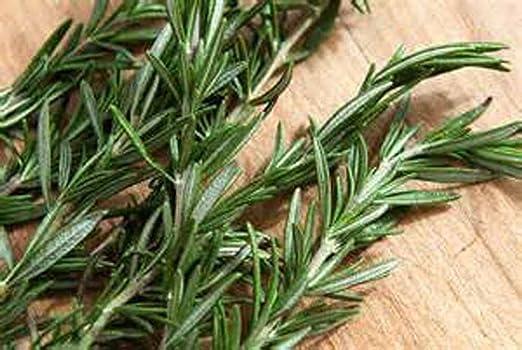 Graines d/'herbe-Romarin 200 graines