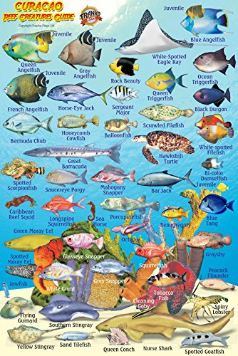 "Curacao Reef Creatures Guide Franko Maps Laminated Fish Card 4"" x 6"""