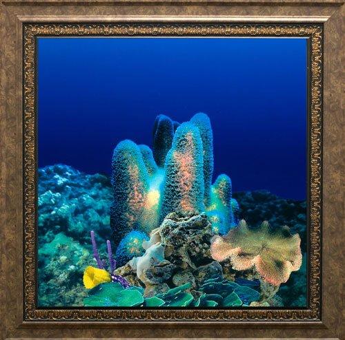 AquaVista AV500CRBASC Wall-Mounted Aquarium AV 500 Coral Reef Background with Scorpio Frame