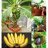 200 pcs Banana Seeds,dwarf fruit trees,Milk Taste,Outdoor Perennial Fruit Seeds For Garden plants