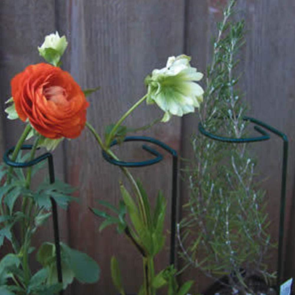 Str/äucher 10 ST/ÜCKE Pflanzenhalter Staudenhalter robust und witterungsbest/ändig perfekt f/ür Stauden Blumen und Gr/äser
