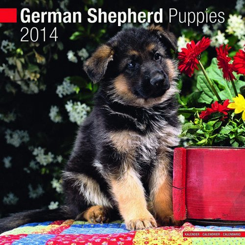 German Shepherd Puppies 2014 Wall Calendar - Dogs 2014 Wall Calendar
