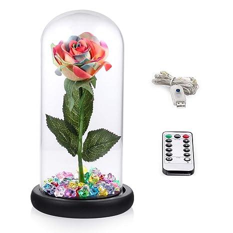 bd4a65ec43fec0 Amazon.com  Louis Garden Beauty and The Beast Rose Kit