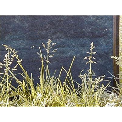 Kentucky Bluegrass Pasture Seed (1 LB) : Garden & Outdoor