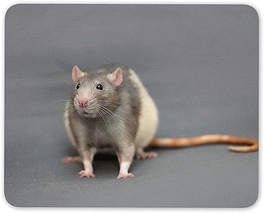 Cute Fancy Rat Mouse Mat Pad - Pet Rats Rodent Mouse ...