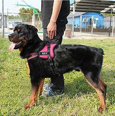 happypettag – personalizado perro arnés, Happy Pet Arnés, Perro ...