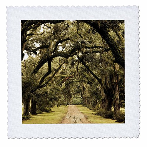 3dRose qs_90514_4 Louisiana, Oak trees, former plantation - US19 WBI0332 - Walter Bibikow - Quilt Square, 12 by 12-Inch