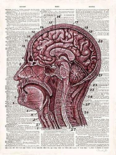 Vintage Anatomy Brain Poster Print by Christopher James