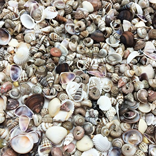 PEPPERLONELY Extra Tiny Mix Sea Shells, Very Small & Clean, 8 OZ Apprx. 1600+ PC Shells, 1/4 Inch ~ 1/2 Inch