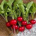 David's Garden Seeds Radish Rover 5114 (Red) 500 Non-GMO, Hybrid Seeds
