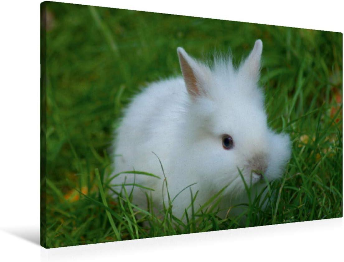 CALVENDO Conejo Enano de Color Blanco, 90x60 cm