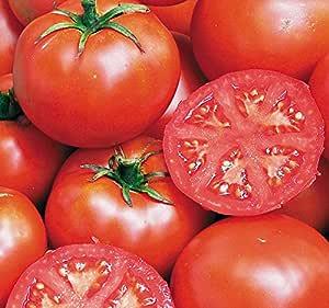 Seed Savers 1435A Tomato John Baer Organic Seed Packet