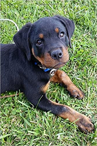Buy So Cute Rottweiler Puppy Dog Pet Lined Journal Book Online At Low Prices In India So Cute Rottweiler Puppy Dog Pet Lined Journal Reviews Ratings Amazon In